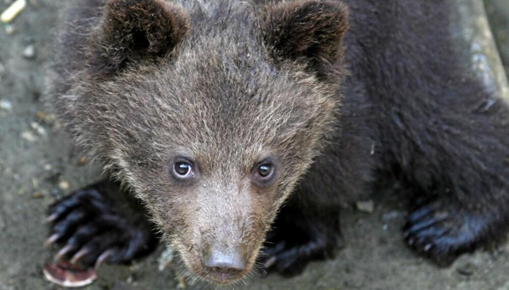 TREND: Bjørn er ikke lenger så populært. Nå er det andre dyrenavn som gjelder.
