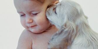 Hund slikker baby i ansiktet.