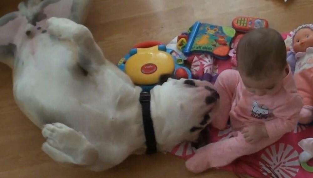 ELSKELIG BULLDOG: Denne store amerikanske bulldogen er svært hengiven mot sin lille lekekamerat.