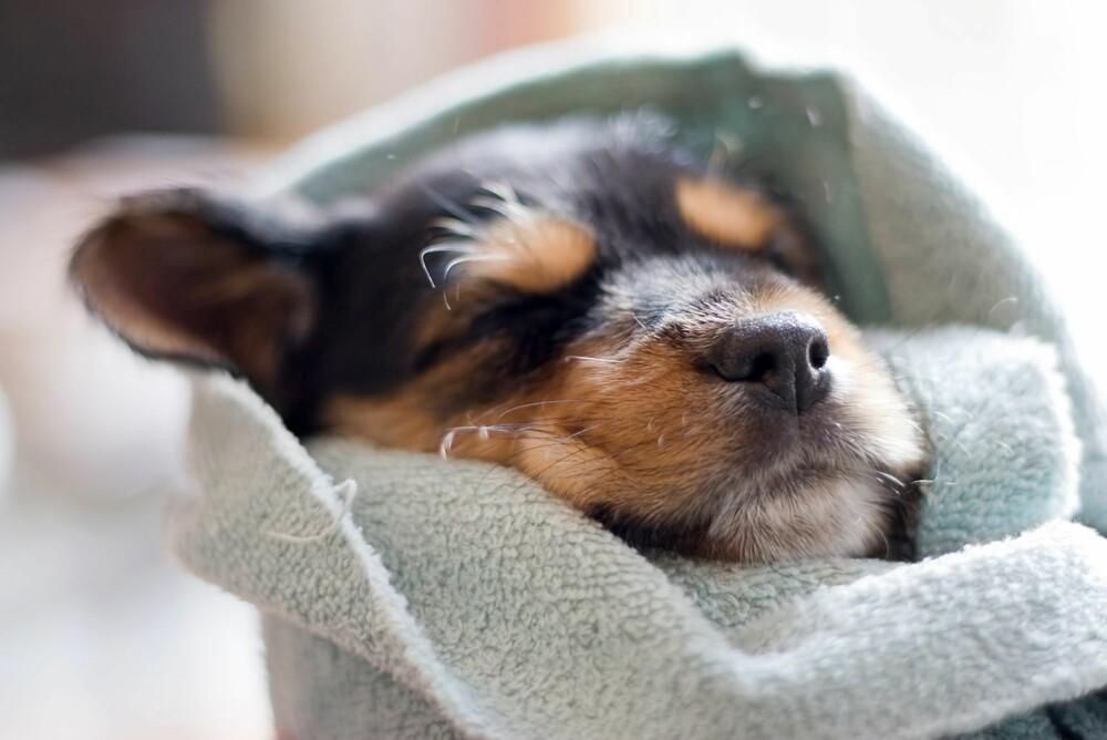UNNGÅ SYK HUND: Det er mulig å forebygge at hunden din blir syk.