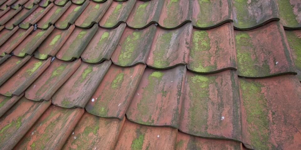 TAKTEKKING: Ser taket ditt slik ut er det nok lurt å sette i gang med utbedrende tiltak. Foto: Colourbox.com