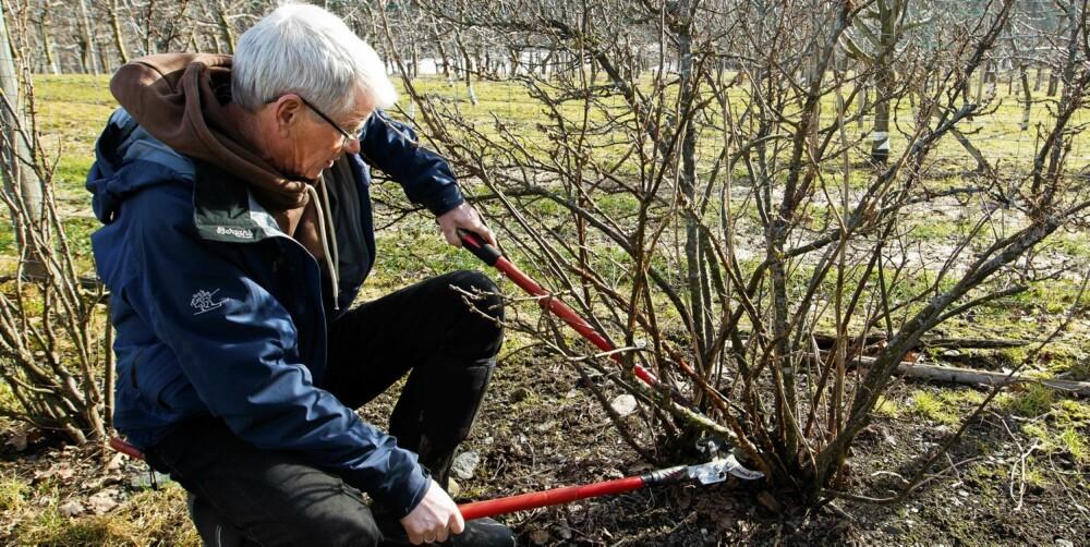 NØDVENDIG UTSTYR: Med disse hageredskapene på plass kan du holde hagen din i topp form.
