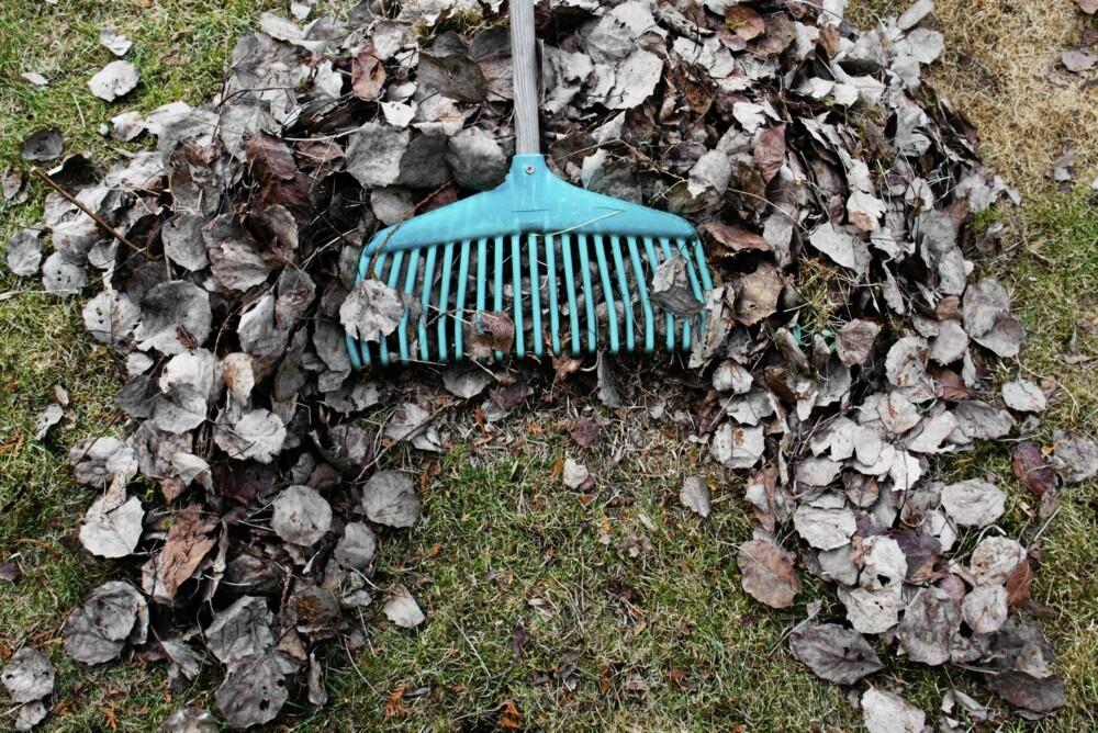 RIVE: Hold hagen ren fra løv og rusk med en god rive.