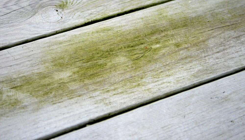 VEDLIKEHOLD: Det er ikke alltid så enkelt å vite hva du skal foreta deg hvis terrassen har blitt angrepet av algevekst.