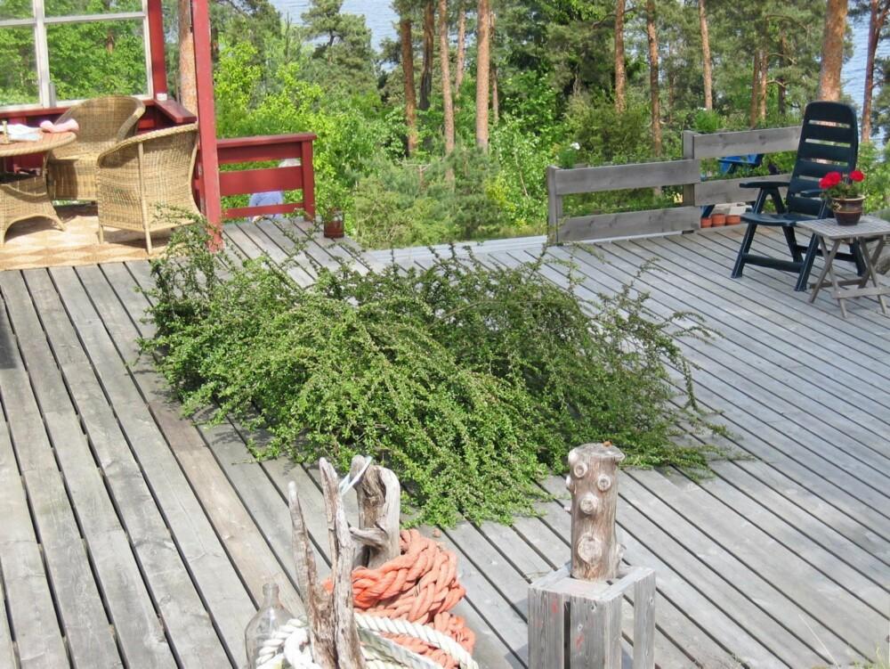 Blomsterbed: Her har terrassegulvet en utsparing for et blomsterbed. Også andre funksjoner som solgrop, sandkasse o.l. kan integreres for å bryte en monoton, stor gulvflate. Enkelte lar også et tuntre stå igjen, ved å bygge terrassen rundt treet. Det kan jo by på utfordringer hvis treet velter i vinden eller skal felles. Men ingenting er umulig.