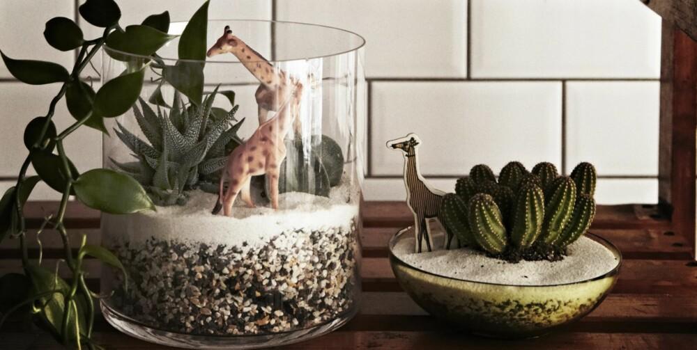 SAFARI I STUA: Hvorfor ikke lage din egen minijungel? Kaktuser er gode til å holde på vannet, og trenger derfor ikke vannes så ofte. Dyrefigurene er fra Dora, mens glassvasene er fra Ikea. Styling: Nicoline Olssen.
