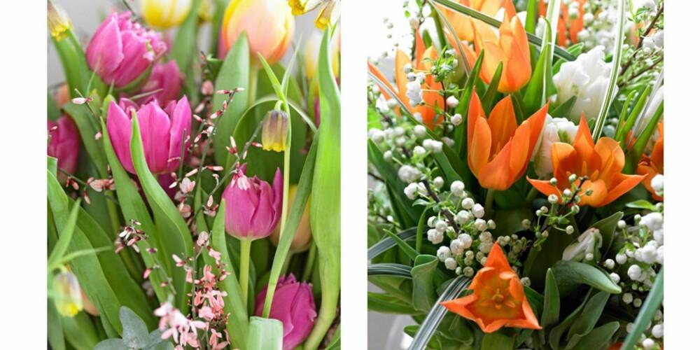 GIFTIG MEN FLOTT: En stor bukett med tulipaner frisker opp i huset. Bare du ikke spiser dem, kan du nyte flotte buketter av deilige farger