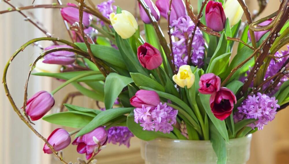 ALT ER LOV: Bruk gjerne fantasien når du pynter med tulipaner. Alt er lov. Her har buketten fått en ekstra snert ved å kombinere blomstene med bøyde kvister.