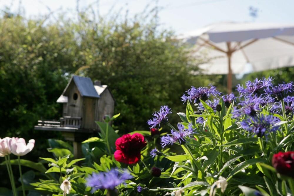 KUNNSKAP OM HERDIGHET: Vet du litt om herdighet og hva de ulike plantene og vekstene tåler, er det enklere å lykkes med hagesyslene.