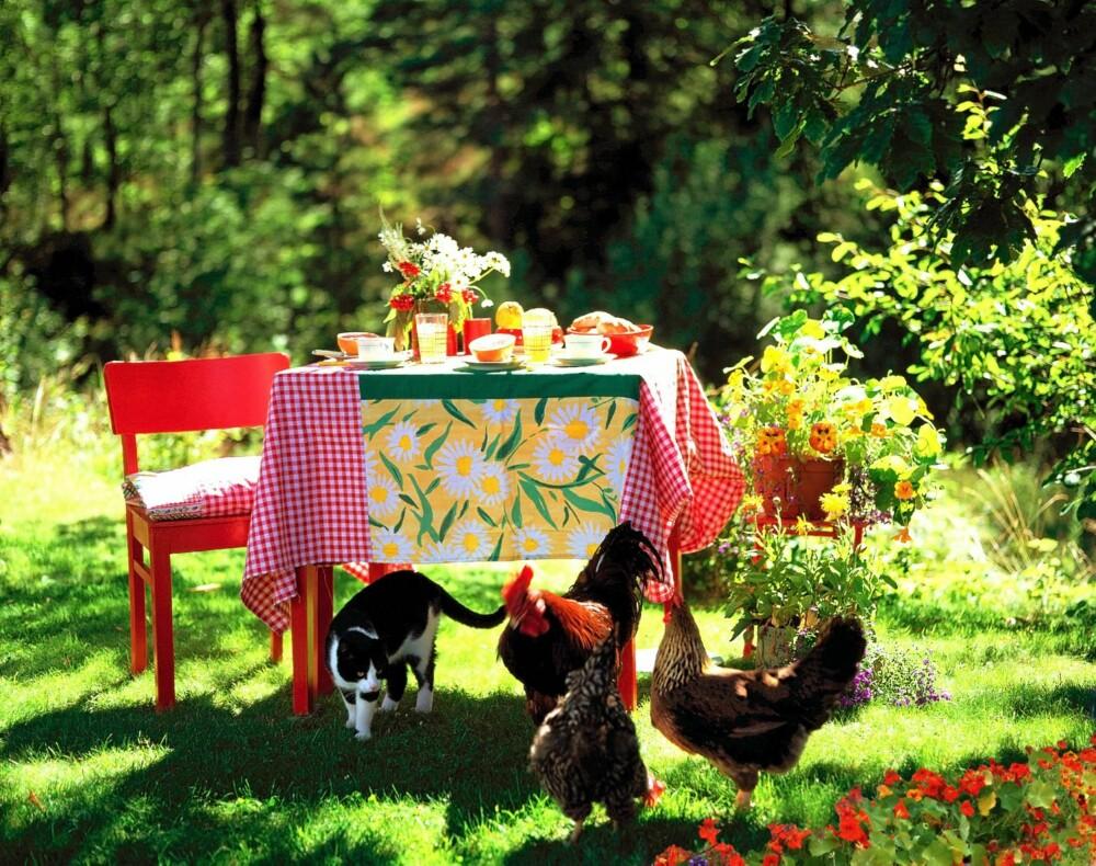 FRODIG HAGE: Ingenting er mer behagelig enn å slå seg ned i en velstelt hage. Men alle som har hage vet at velstelt ofte er synonymt med arbeidskrevende. Sørg for at du har en så enkel hage som overhodet mulig.