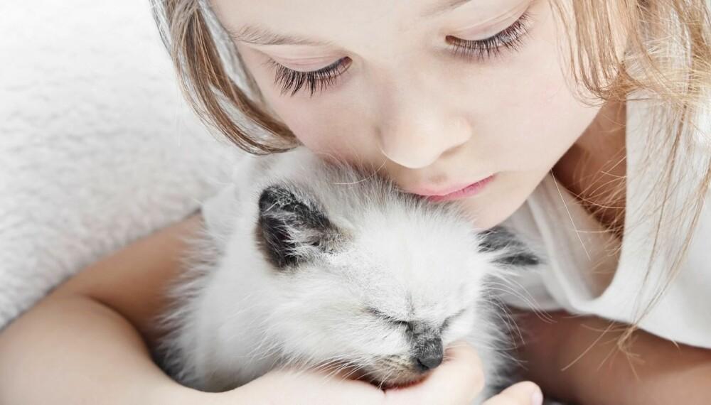 BARN MED DYREALLERGI: Flest barn er allergisk mot katt. Allergenene til en katt er mye mer klebrige og setter seg godt fast både på klærne og kroppen til kattens eier enn hundehår.