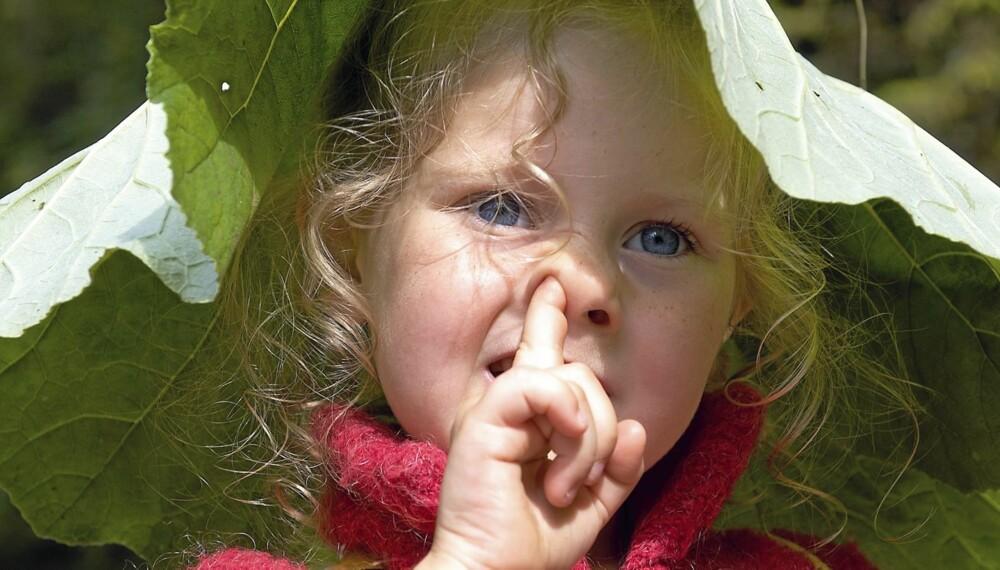 UVANE: Selv om det er naturlig å pille seg i nesen, trenger ikke barna putte neseinnholdet i munnen.