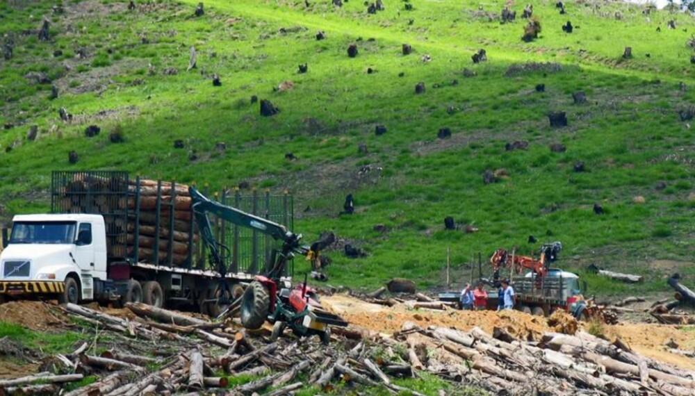 RASERING: Årlig avskoges et område tilsvarende halve Norge.