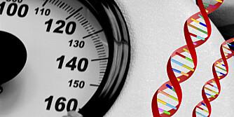 DNA: Genene påvirker kroppsvekten