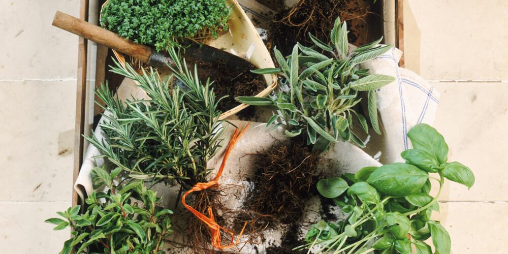LOKALT: Grønne urter er rike på antioksidanter og ofte lokalt dyrket