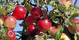 Frukttrær til Klikk.no/bolig
