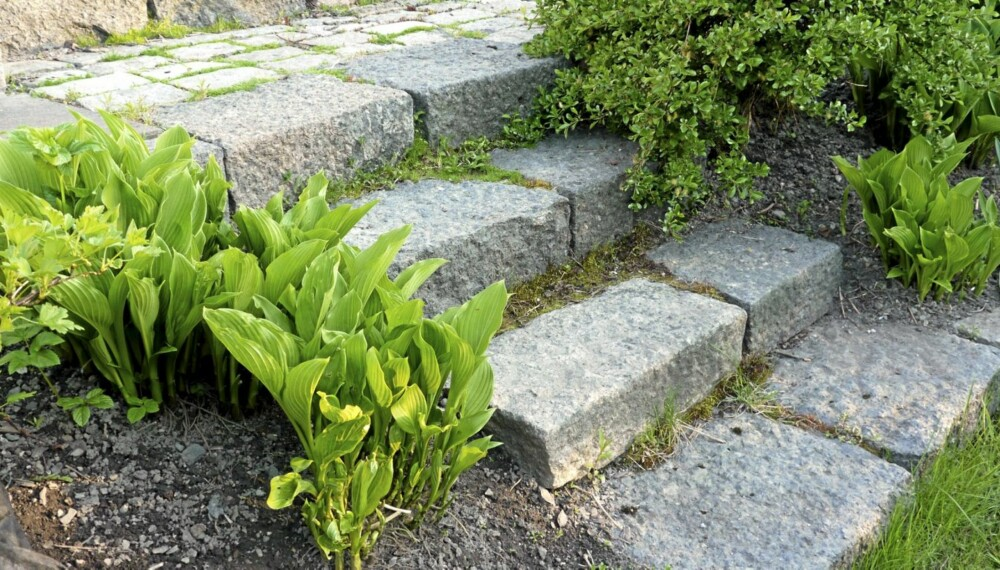 UTETRAPP I STEIN: En steintrapp er lett å lage og glir fint inn i hagen
