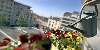 TØRSTE PLANTER: Gi plantene nok vann i sommervarmen, men husk: Planter kan dø av for mye vann også.