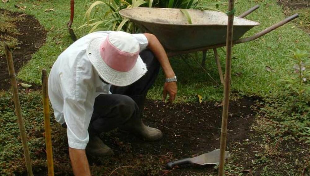 TEST FØRST: Tar du jordprøver, får du greie på pH-verdien i jorda og kan gjødsle deretter.