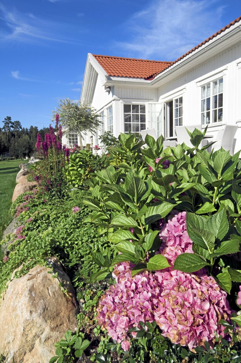 FAVORITTER: Kari Mette Glømmi har plantet slik at det til enhver tid er noe som står i blomst. Fargene på blomstene er i nyanser av rosa, lilla og blått. Hortensiaen i forgrunnen er en av hennes favoritter fordi den blomstrer i mange måneder.