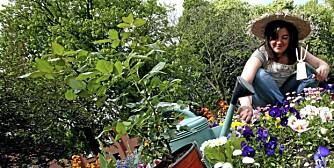 GJØDSLING: Gjødsel er grunnlaget for en frodig hage, og det handler om å bruke forskjellig gjødsel på ulike vekster.