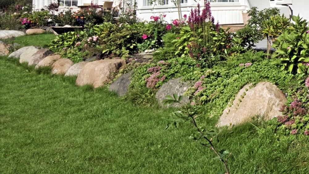 HVORDAN LAGE BED: Slike steiner kan du få ganske rimelig dersom du kommer over et sandtak hvor noen ønsker å bli kvitt stein. Også anleggsgartnere kan være behjelpelig med å skaffe alle typer stein. Dersom man har dårlig jord på tomten er slik oppbygde bed en god løsning. Når steinene er på plass kan man fylle på med god matjord som gir plantene gode vekstforhold.