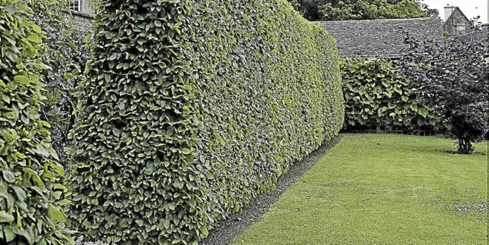 FOR VARMT PÅ SOMMEREN: Det egner seg best å grave opp og plante hekk tidlig på våren eller når det er blitt høst og kaldere i været.