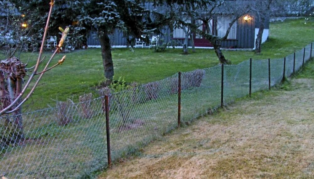 LIVET PÅ DEN GRØNNE GREN: Skal du få en grønn og fin plen bør du begynne å gjødsle nå, ifølge hageekspertene. Det er spesielt kalium som gir gresset den dype sterke fargen.