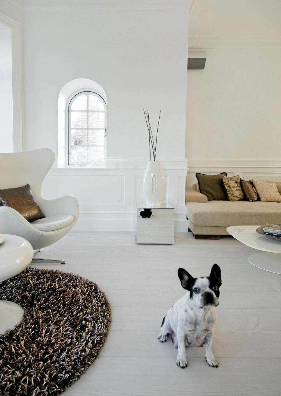 HELDIG HUND: Chanel har godt med boltringsplass i villaen ved Øresund.