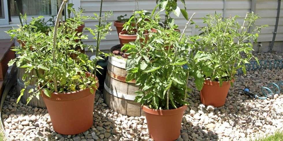 PLANT SELV: Krydder og grønnsaker kan plantes i krukker, kasser eller ...