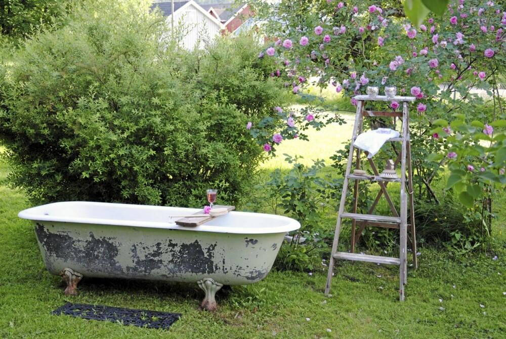 Et herlig, gammelt, badekar har fått plass ved rosebusken i hagen.