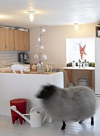 INNESAU. Sauen Magnus sørger for at det ikke skjer noe krøll på kjøkkenet. Glasskulene er hjemmeblåste. Vasene foran vinduet er også fra Astrids Glass. Kjøkkenet var det første rommet som ble pusset opp. En lokal snekker bygde innredningen i grisehuset.