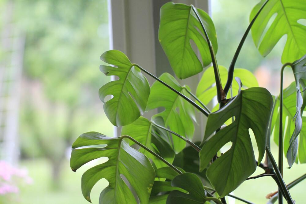 PÅ VEI UT: Grønne planter er på vei ut, mener interiørdesigner i Intro interiørdesign AS, Mia Kjeldstad Hansen.