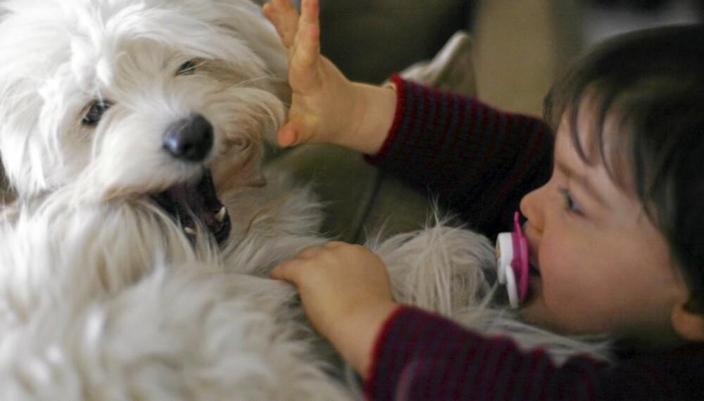 BARN OG HUNDER: Kan det å oppdra barn sammenlignes med å trene hund?