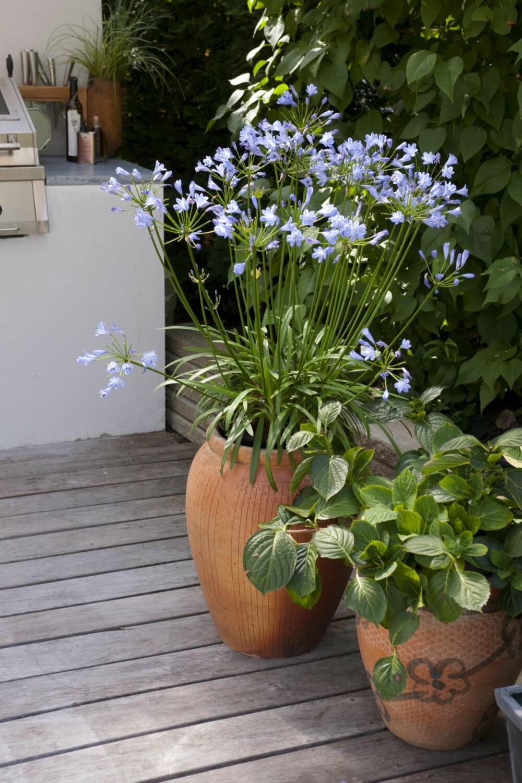 BLOMSTER: Pynt med blomster som tåler høstklima.