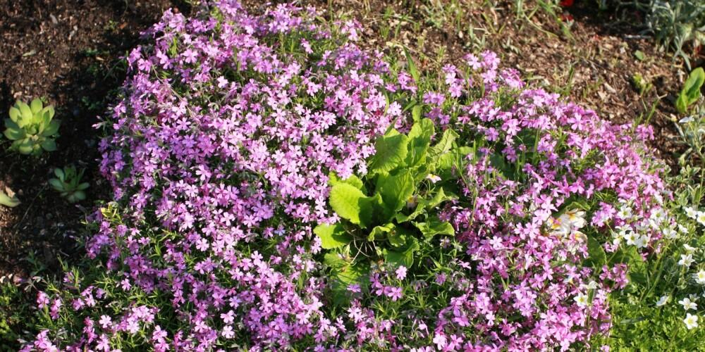 MANGE MULIGHETER: Det er mange planter og busker som trives i skråningen.
