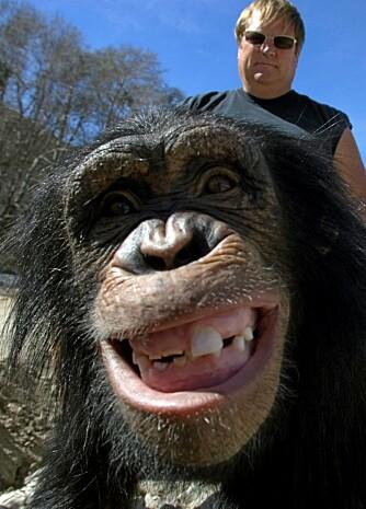 FRIVILLIG: Som en del av en økologisk ferie kan du tiblringe noen dager ved å gjøre frivillig arbeid på et redningssenter for sjimpanser.