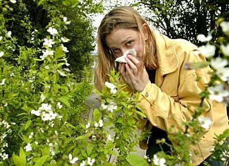 MER ALLERGI: Det at stadig flere av oss har bosatt seg i byer og tettsteder i stedet for på landet, har trolig ført til at flere blir allergiske.