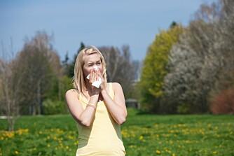 PLAGSOM ALLERGI: Våren er en fin tid, men for pollenallergikerne kan det være vanskelig å nyte den.  ILLUSTRASJONSFOTO: Colourbox