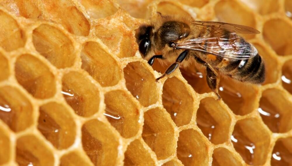 HONNING: Små barn bør ikke spise honning pga botulisme