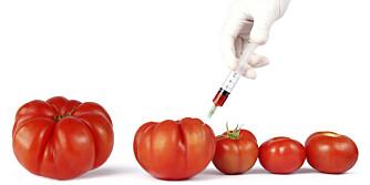 BARE AB: Tomater er supergunstig for blodtype AB, mens personer med blodtype A, B og O bør unngå denne matvaren.