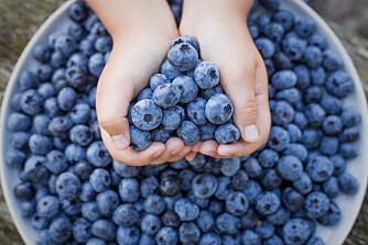 OPPSKRIFTER MED BLÅBÆR: Blåbær kan brukes til så mangt; her som hovedingrediens i syv herlige oppskrifter. Foto: Gettyimages.com.