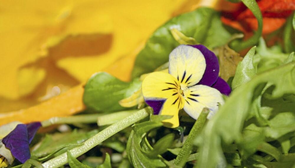 MATGLEDE: En liten stemorsblomst i salaten frisker opp måltidet.