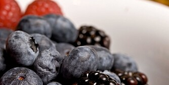 SUNT OG BLÅTT: Spis blåbær og lev lenger og bedre.