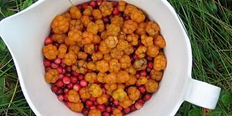MULTER: En god kilde til vitamin E, C og kostfiber.