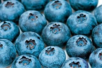 FOREBYGGER KREFT: Blåbær inneholder antioksidanter og har mange helsefremmende egenskaper, blant dem å motvirke aldring og forebygge kreft.