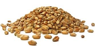 BULGUR: Kornet har en lett nøttaktig smak som de fleste liker.