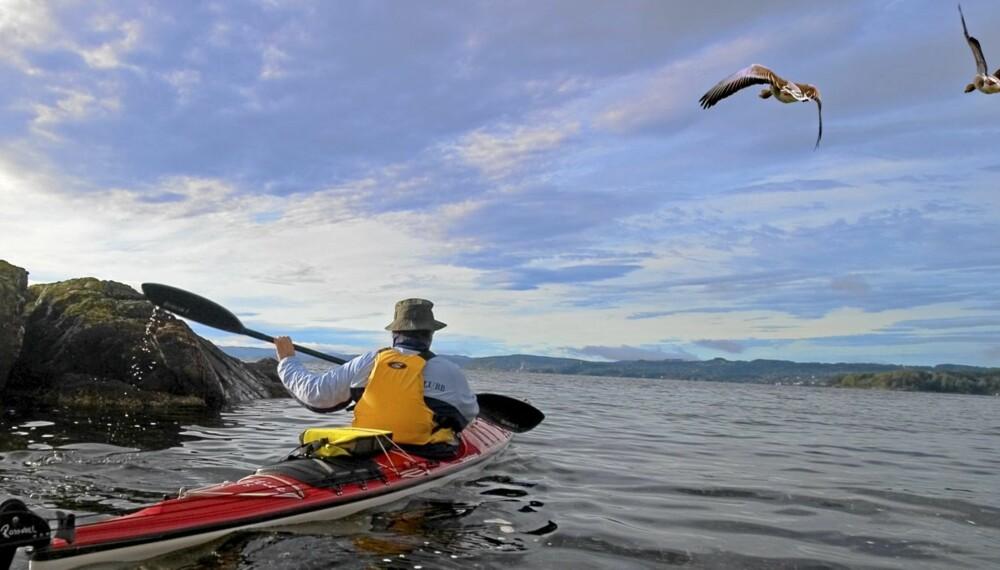 KAJAKK: Padle om kapp med grågåsa på Svalbard.