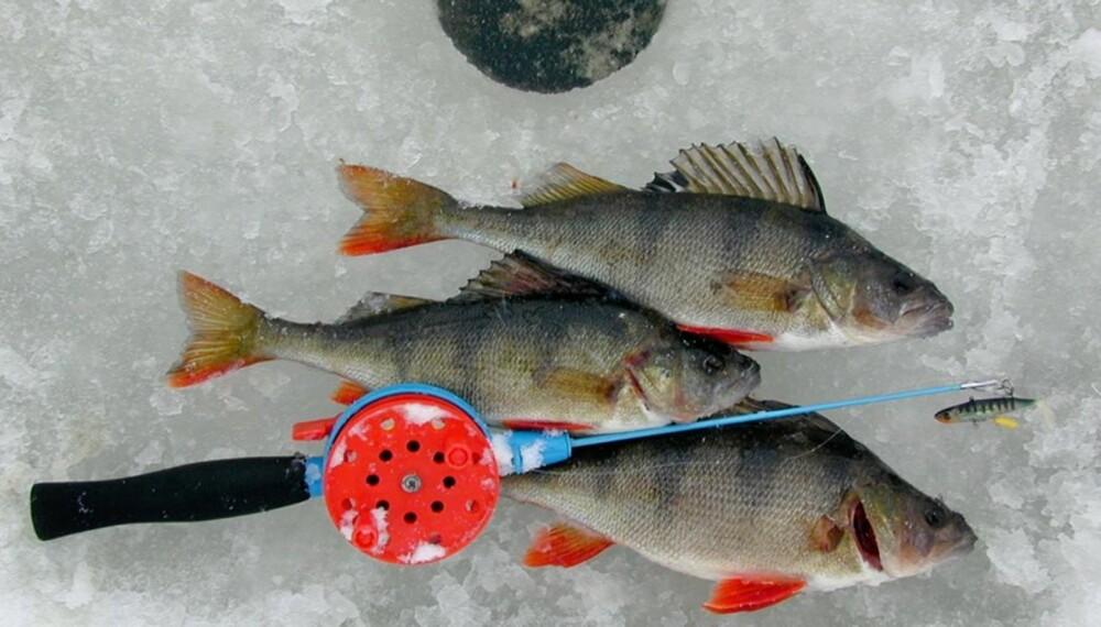 LYSPUNKT I MØRKETIDA: Isfiske er morsomt, spennende, enkelt og billig!