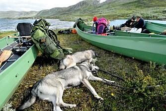 PUST I BAKKEN: Både hunder og folk hviler ut etter en lang og tung etappe.